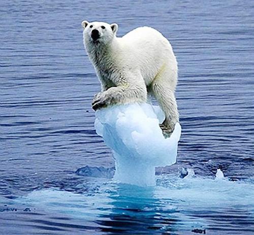 nóng lên toàn cầu đẩy gấu bắc cực đến bờ tuyệt chủng
